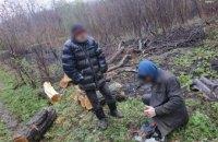 На Днепропетровщине неизвестные незаконно вырубали лес (ФОТО)