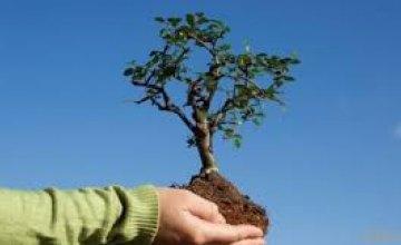 После стихии в Днепре инициировали акцию «Посади дерево - спаси город»