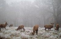 Украинцев ожидают заморозки