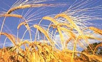 Эксперты: земля сельхозназначения в 2009 году продаваться не будет