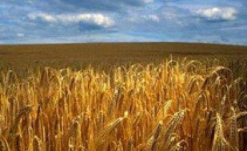 «Всеукраинский день поля - 2008» в Днепропетровске станет международным