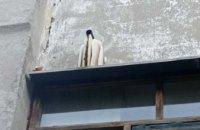 В Днепре на стене 16-этажки поселился пчелиный рой (ФОТО)