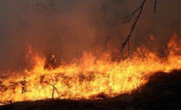 Пожар в заповеднике «Аскания-Нова» выжег 50% степей
