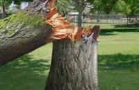 В Донецкой области непогода повалила около 1 тыс. деревьев