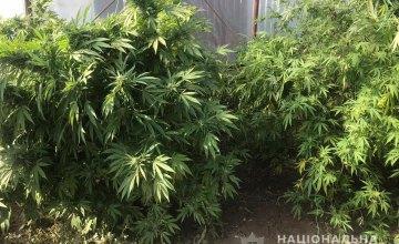В Одессе 36-летний «наркоаграрий» вырастил конопли более чем на 4 млн грн (ФОТО)