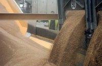 Аномальная жара не повлияет на количество урожая зерновых, - Укргидрометцентр