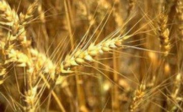 Николай Азаров запретил печь хлеб из зерна для скота
