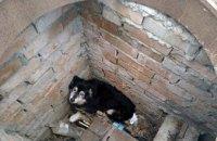 На Днепропетровщине в открытый колодец упал щенок (ФОТО)