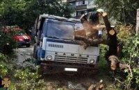 В Днепре  дерево рухнуло на КамАЗ:  повреждена кабина