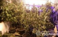 В Днепропетровской области мужчина выращивал дома коноплю (ФОТО)