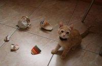 В Киеве бродячий кот разгромил магазин