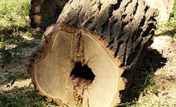 В Днепропетровске уменьшается количество деревьев и увеличивается число кустарников