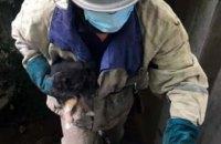 На Днепропетровщине маленький щенок провалился в выгребную яму (ФОТО)