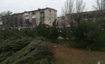 В Днепре обнаружили незаконные точки по продаже елок