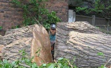 КП «Горзеленстрой» не может снести старые деревья, угрожающие жизни днепропетровцев