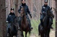 Рейды по лесхозам в Днепропетровской области: выявлено более десятка незаконно срубленных елок