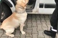 Служебная собака обнаружила на границе контрабанду сигарет (ВИДЕО)