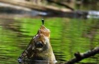 На Днепропетровщине ловля рыбы с апреля по июнь разрешена только в строго отведенных местах