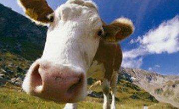 В Днепропетровской области есть хорошая база для развития молочных кооперативов и обучающей фермы, - «Данон-Юнимилк» в Украине
