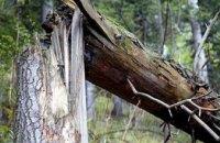 В Каменском из-за непогоды на женщину упало дерево