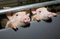 Руководители городов и районов лично отвечают за предотвращение распространения африканской чумы свиней
