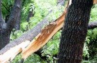 В Днепропетровске ликвидируют последствия непогоды: рабочие откачивают воду и убирают поваленные деревья