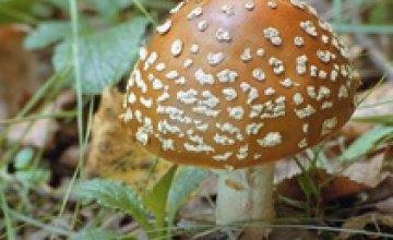 В Днепропетровской области 8 человек отравились грибами