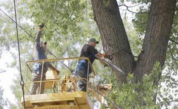 В Днепре удаляют аварийные деревья, которые мешают жизнедеятельности города и подвергают жителей опасности