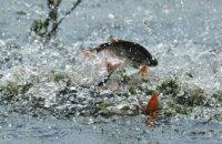 На реках Днепропетровщины ограничили вылов рыбы из-за нереста