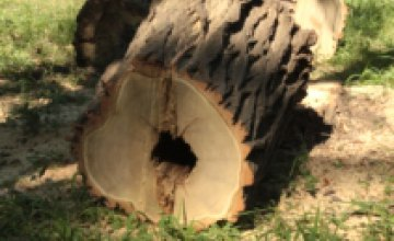 Упавшее дерево убило 45-летнего рабочего