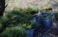 Мільйон дерев за добу: Дніпропетровщина долучилась до світової екологічної ініціативи