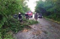 На Днепропетровщине спасатели убрали дерево, упавшее на проезжую часть дороги