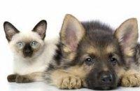 Где можно в Днепре зарегистрировать домашних животных (АДРЕСА)