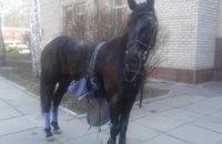 В Кривом Роге ищут хозяина потерявшейся лошади (ФОТО)