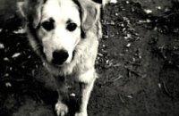 В парке Глобы пройдет акция в поддержку создания приюта для животных