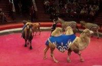 Дети сотрудников Павлоградского химзавода поделились впечатлениями от циркового представления «Новогодний калейдоскоп»