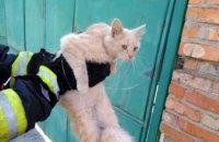В Никополе спасатель попал в больницу из-за укуса кота, которого снимал с дерева (ФОТО)