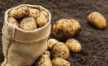 В супермаркетах Днепра начал дорожать картофель