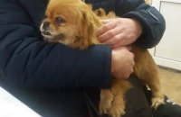 В Днепре к хозяевам вернулась собака, потерявшаяся на Новый год (ФОТО)