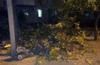 В Днепре во дворе дома упало дерево