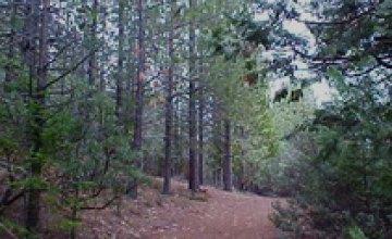 В 2010 году в Днепропетровской области леса горят реже, чем в 2009-м