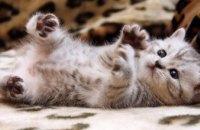 В США представили духи с запахом котенка