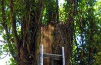 На Днепропетровщине спасатели помогли пушистику, застрявшему на дереве (ФОТО)