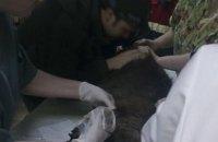 В Киеве «Команда спасения животных» достала из капкана бобра (ФОТО)
