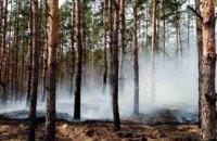 В Обуховском лесничестве Днепра случился пожар (ФОТО)