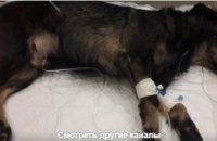 В Днепре спасли собаку, у которой застряла кость в пищеводе