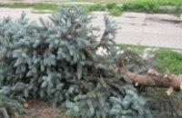 В Днепропетровской области зажгут более 35 тыс. легальных елок