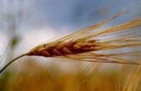 Цены на зерно подскочили до 2-летнего максимума