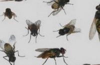 Художник из Запорожья создал серию картин из мух