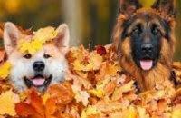 Какая погода будет в Днепре 3 и 4 ноября